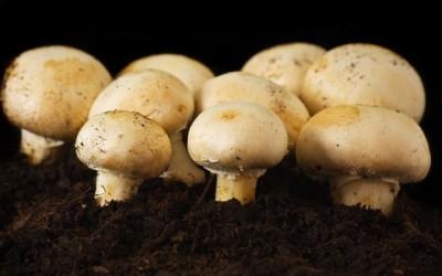 Come coltivare funghi freschi in casa 13