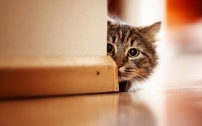 I consigli pratici per i nostri giochi con gatti 7