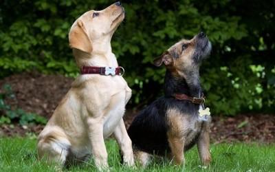 Scopriamo le razze di cani più belli e interessanti 2