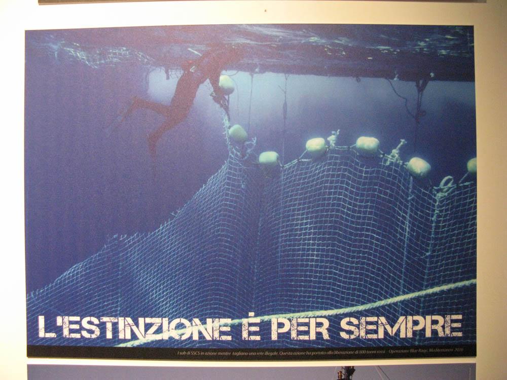 Trento Veg - 2012 Days of future past 303