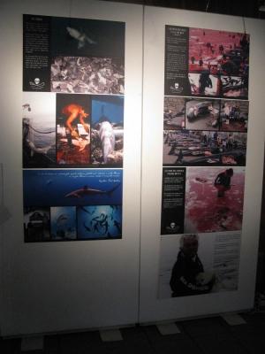 Trento Veg - 2012 Days of future past 114
