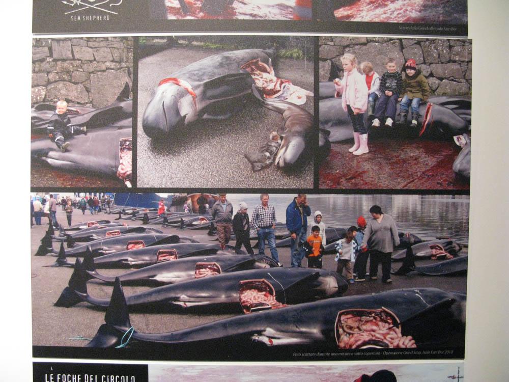 Trento Veg - 2012 Days of future past 308
