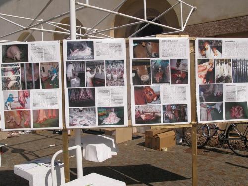 Trento Veg - 2012 Days of future past 73