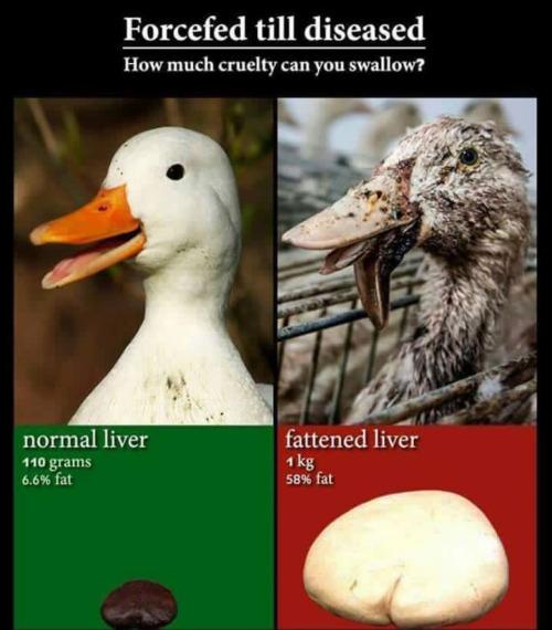 ▶️▶️▶️ http://www.veganpeace.com/animal_cruelty/foiegras.htm 19