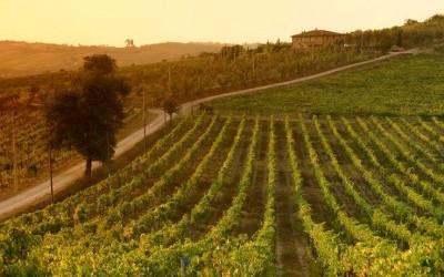 Vino biodinamico: che cos'è e quali sono le differenze dal vino biologico? 1