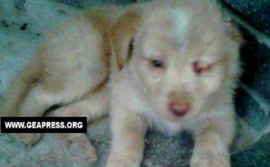 Vibo Valentia: un altro cucciolo nella spazzatura 5