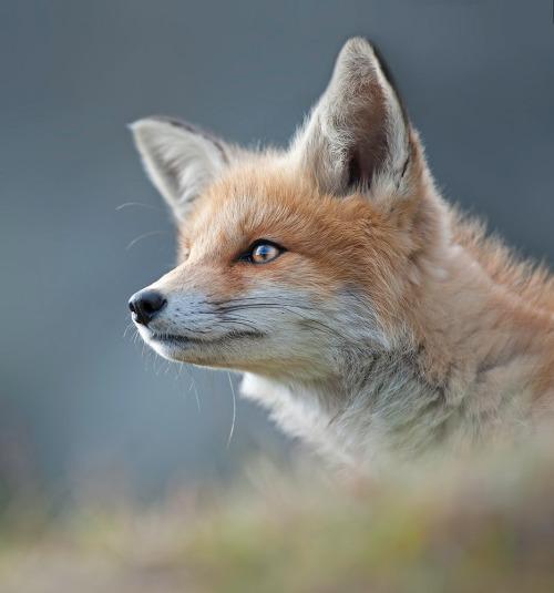 beautiful-wildlife: ~Portrait~byJohannes_Amshoff 13