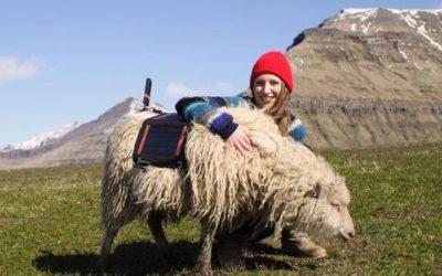 Sheep view, ovvero le isole Far Oer viste dalle pecore 4