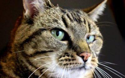 Gatto soriano: carattere, educazione e aspetto 4