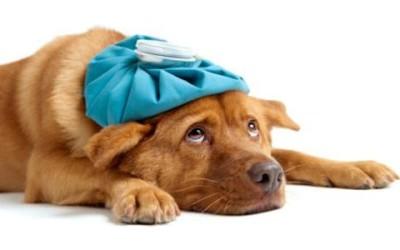 Come curare gli animali domestici in modo naturale 1
