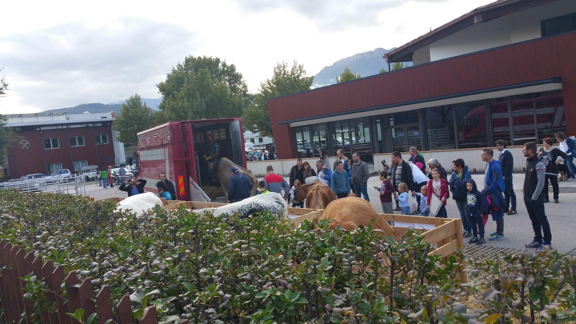 Fronte animalista Bolzano - Manifestazione Porte aperte 10 anni della casa della zootecnia 16