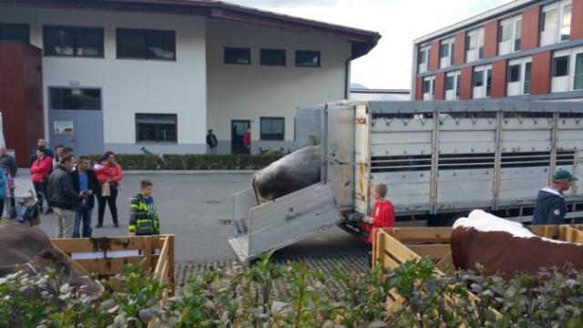 Fronte animalista Bolzano - Manifestazione Porte aperte 10 anni della casa della zootecnia 7