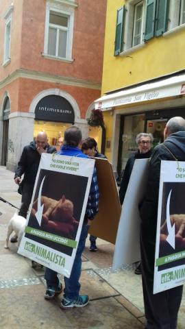 """""""A PASQUA NON UCCIDO"""" Manifestazione di protesta contro la strage pasquale di agnelli e capretti 8"""