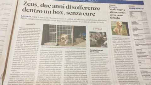 ZEUS, UCCISO DALL'INDIFFERENZA 9